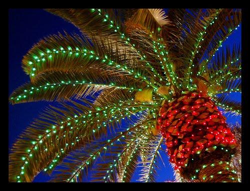 Christmas Lights Palm trees 5