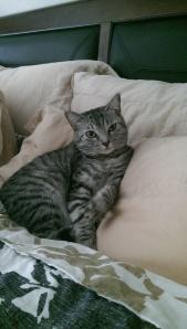 My rescue kitty and nap buddy Shima