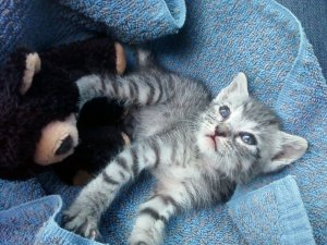 My little rescue kitty with her teddy bear littermate!  Shima is 5 years old now and a sweet and wonderful cat...