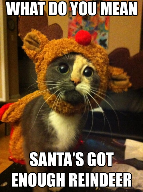 reindeer-cat