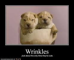 Puppy wrinkles