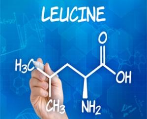 Leucine310x250