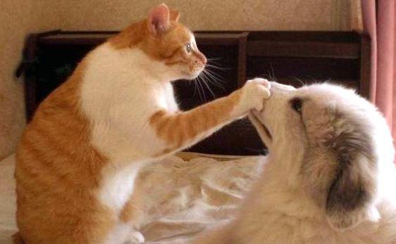 Cat shutting dog up