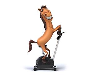 Horse_Gym_310x250