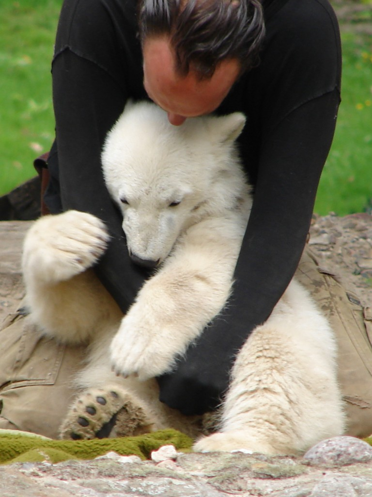 Knut hug