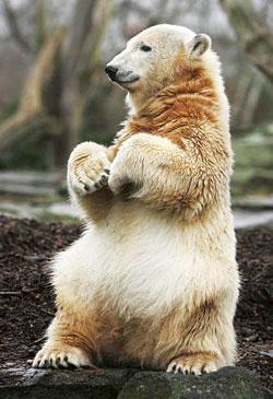 Knut sit