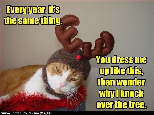 cat-reindeer-funny